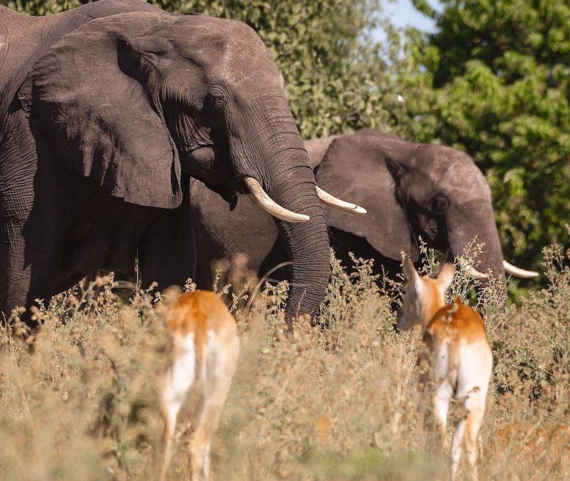 6-Tage Klassiker Safari